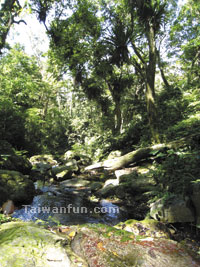 A natural greenhouse: Finding peace in Snow Mountain's bird's nest fern forest